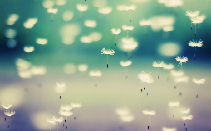tumblr_static_beautiful-dandelion-wallpaper